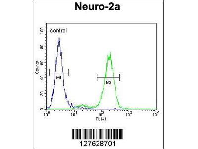 Rabbit Anti-ALAS2, NT Antibody