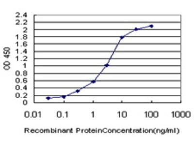 Mouse Anti-PLEKHO2 Antibody