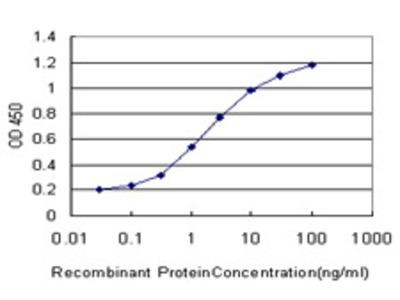 Mouse Anti-MTF1 Antibody