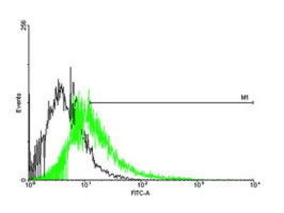 Mouse Anti-CACNG1 Antibody