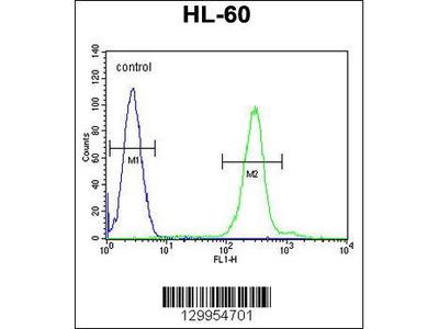 Rabbit Anti-PLA2G2C, CT Antibody