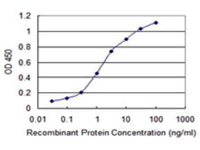 Mouse Anti-PXDN Antibody