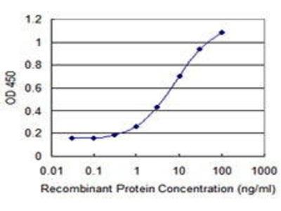 Mouse Anti-FBXO31 Antibody