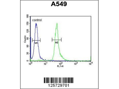 Rabbit Anti-HEMK1, CT Antibody