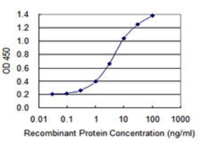 Mouse Anti-SCYL3 Antibody
