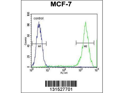 Rabbit Anti-PCDH20, ID Antibody