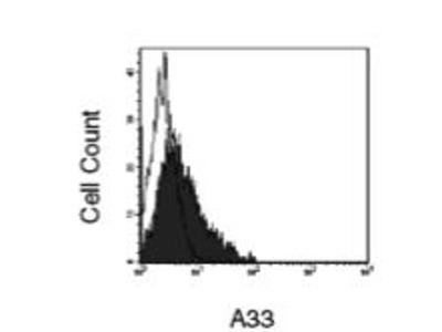 Rat Anti-A33 Antibody