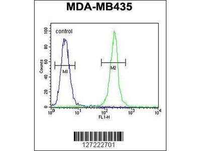 Rabbit Anti-TRHDE, CT Antibody