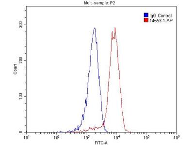 CD13 antibody