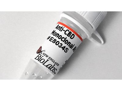 Anti-CBD Monoclonal Antibody