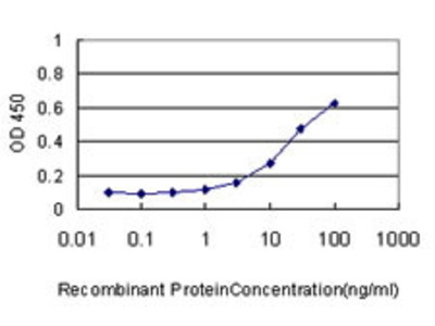 Mouse Anti-CKS1B Antibody