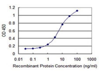 Mouse Anti-DAP1 Antibody