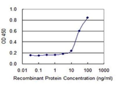 Mouse Anti-SPAG4 Antibody