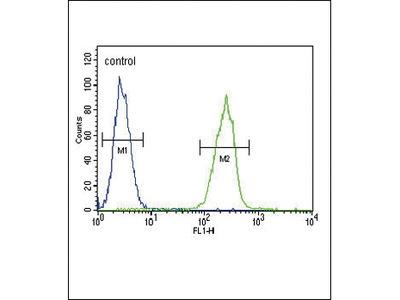 Rabbit Anti-Thyroxine Binding Globulin, CT Antibody