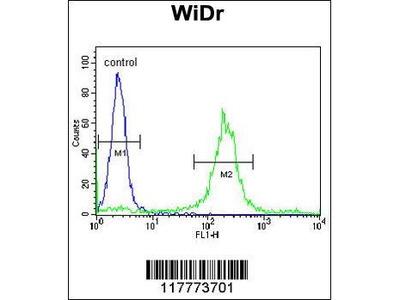 Rabbit Anti-ADAM19, ID Antibody
