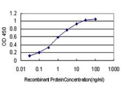 Mouse Anti-QPRT Antibody