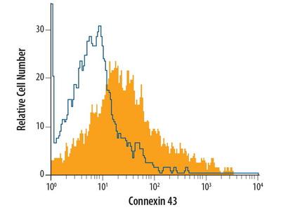 Mouse Anti-Connexin 43 Antibody