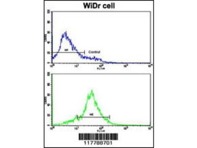 Rabbit Anti-HSPCB, ID Antibody