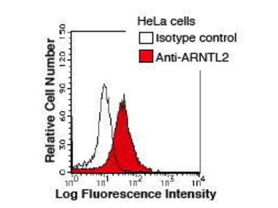 Mouse Anti-Aryl Hydrocarbon Receptor Nuclear Translocator-like 2 Antibody
