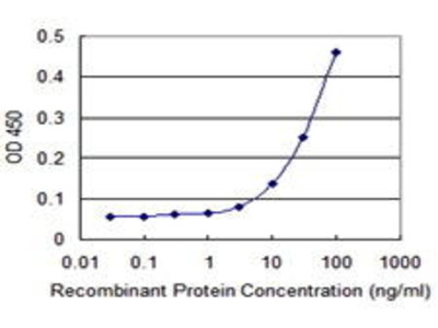 Mouse Anti-PRM1 Antibody