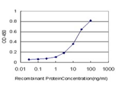 Mouse Anti-GRID2 Antibody