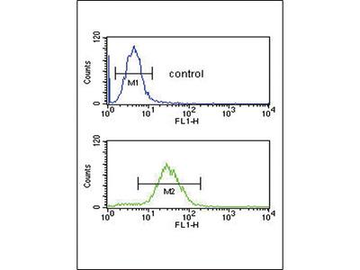 Rabbit Anti-CFL1, ID Antibody