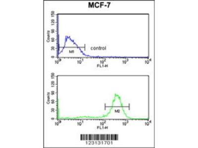 Rabbit Anti-CHPF, ID Antibody