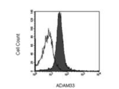 Mouse Anti-ADAM 33 Antibody
