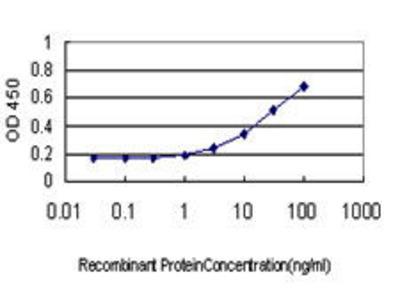 Mouse Anti-C1GALT1 Antibody