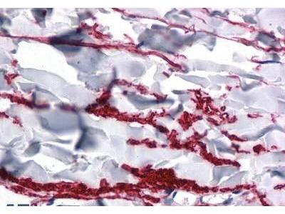 Rabbit Anti-FAM59A, CT Antibody