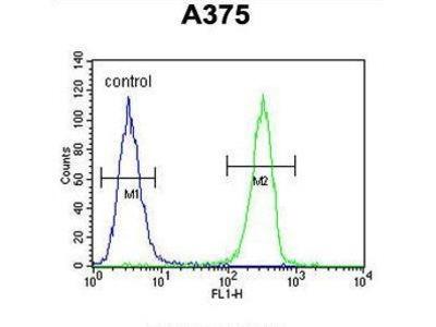 Rabbit Anti-HOXA9 Antibody