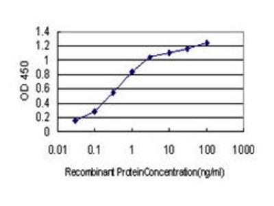 Mouse Anti-Cytochrome P450 46A1 Antibody