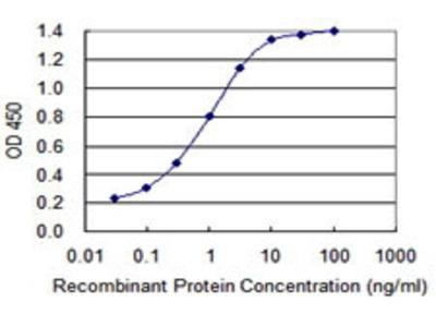 Mouse Anti-DPYSL2 Antibody