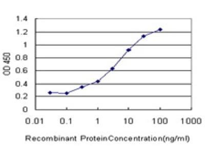 Mouse Anti-SLC15A1 Antibody