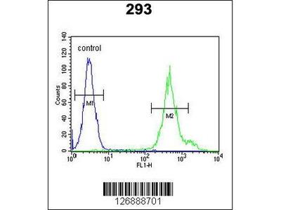 Rabbit Anti-KLC3, ID Antibody