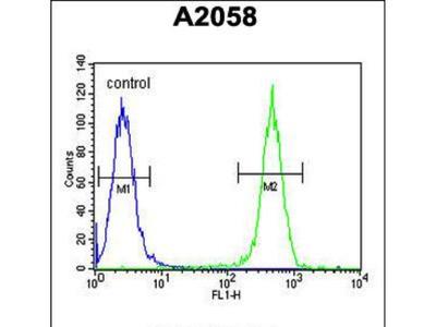 Rabbit Anti-COL17A1, ID Antibody