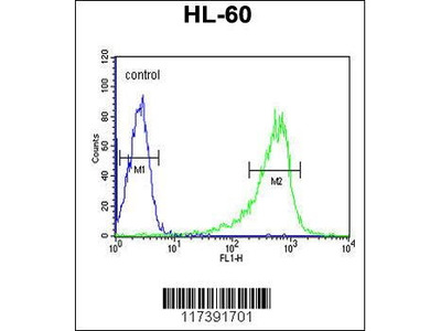 Rabbit Anti-PLCB1, CT Antibody