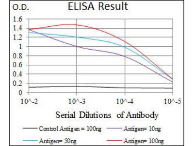 Mouse Anti-SLC2A4 Antibody