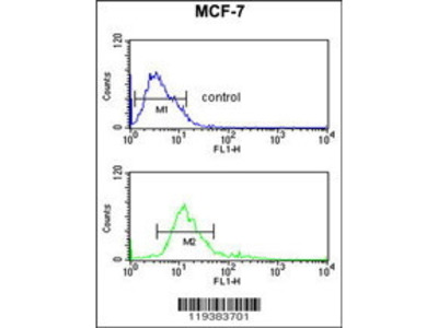 Rabbit Anti-Inosine Monophosphate Dehydrogenase 2 Antibody