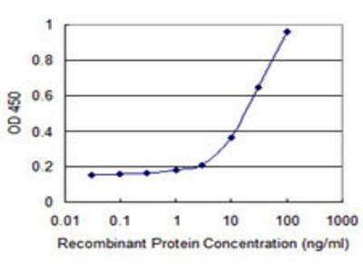 Mouse Anti-THOC3 Antibody
