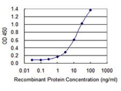 Mouse Anti-CGB7 Antibody