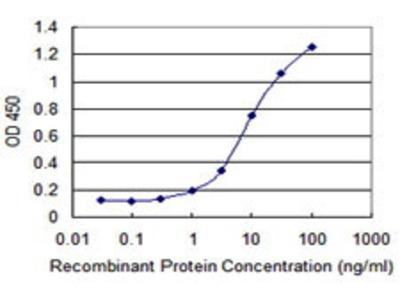 Mouse Anti-KIR3DX1 Antibody