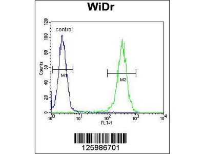 Rabbit Anti-B4GALT5, CT Antibody