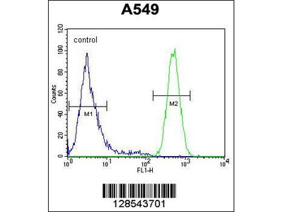 Rabbit Anti-EPAS1, NT Antibody