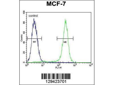 Rabbit Anti-C1QL4, NT Antibody