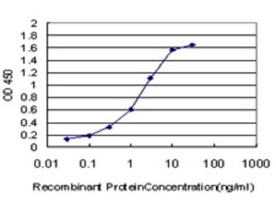 Mouse Anti-BNIP3L Antibody