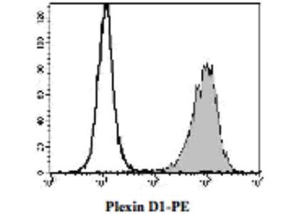 Goat Anti-Plexin D1 Antibody (PE)