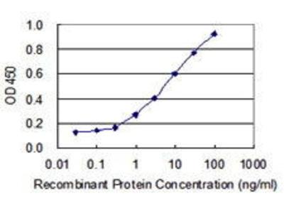 Mouse Anti-U2AF1 Antibody