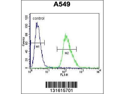 Rabbit Anti-ARRB1, CT Antibody