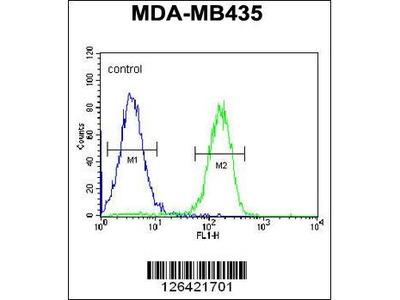 Rabbit Anti-PYHIN1, NT Antibody